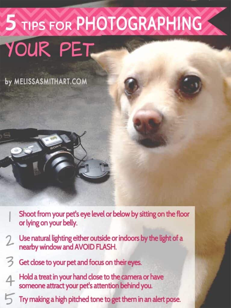 5 easy tips for photographing your pet